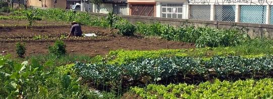 Hortas urbanas e rurais  -  sustentáveis e orgânicas